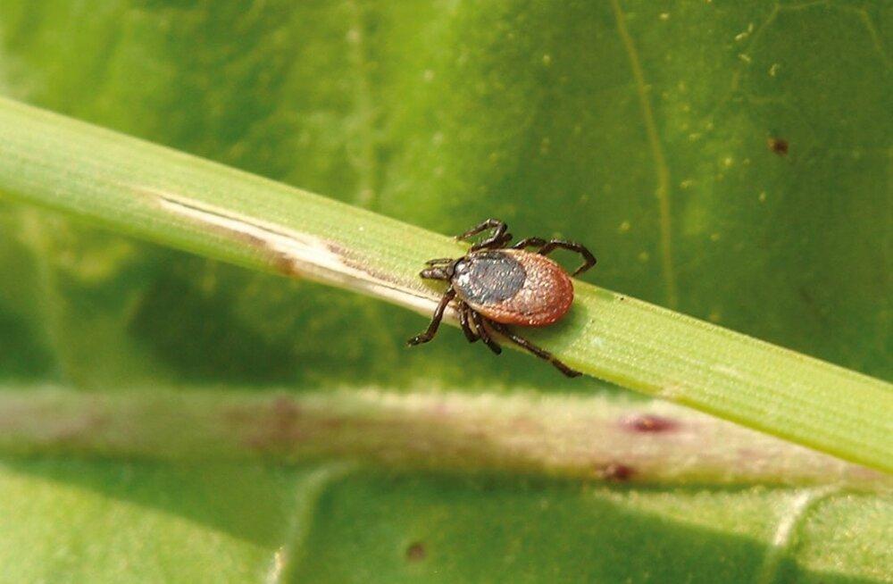 ❶ насекомые (жуки) похожие на клещей - как выглядят и как избавиться