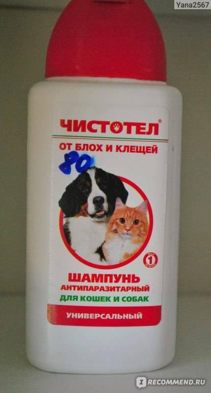 Как часто можно мыть котенка шампунем от блох, чтобы избавиться от паразитов и не навредить здоровью малыша