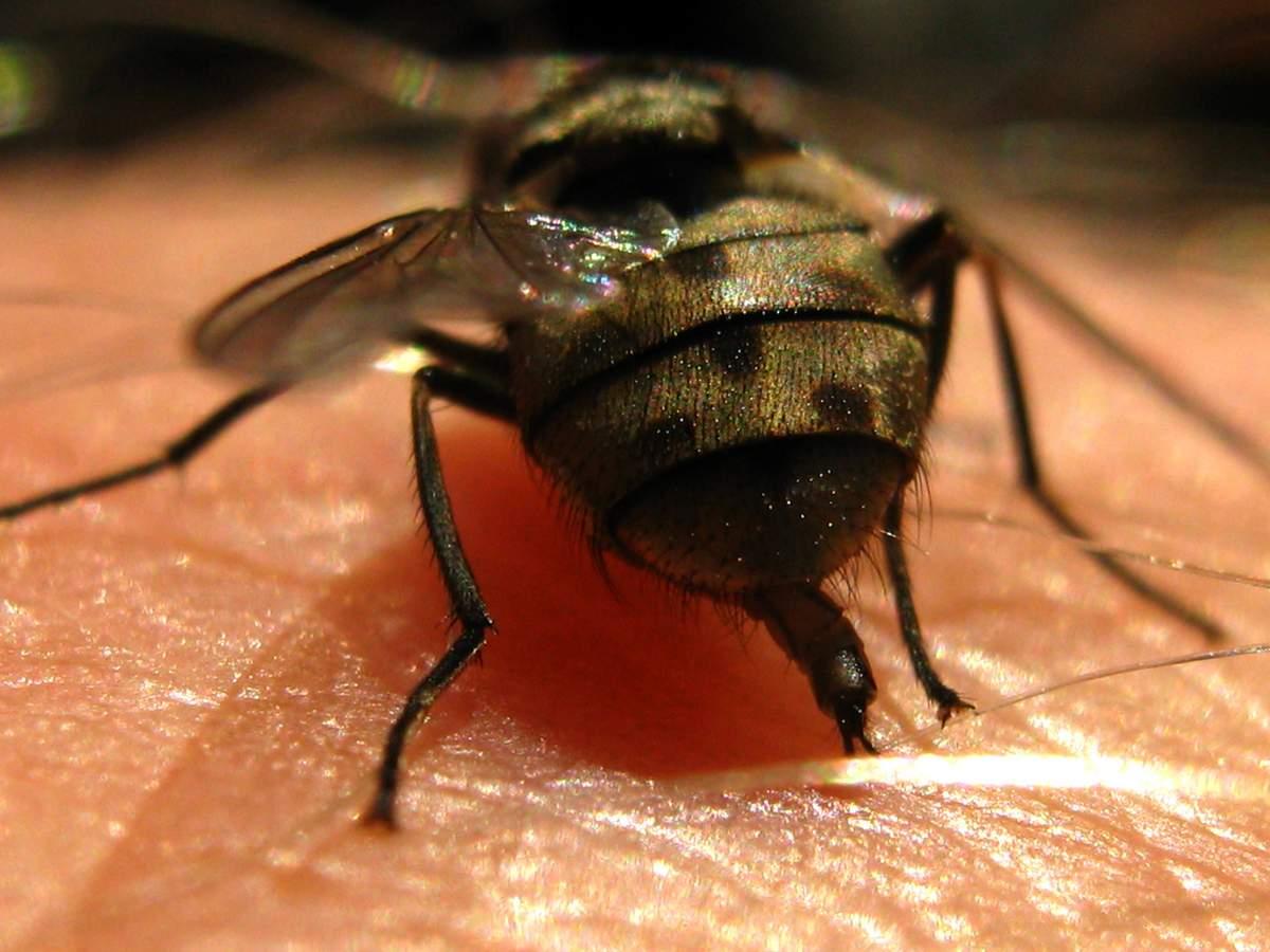 Укусы насекомых - фото кто укусил и таблица, первая помощь при покраснении, опухоли и зуде
