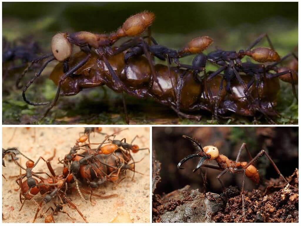 Муравей - 91 фото насекомого умеющего считать до десяти