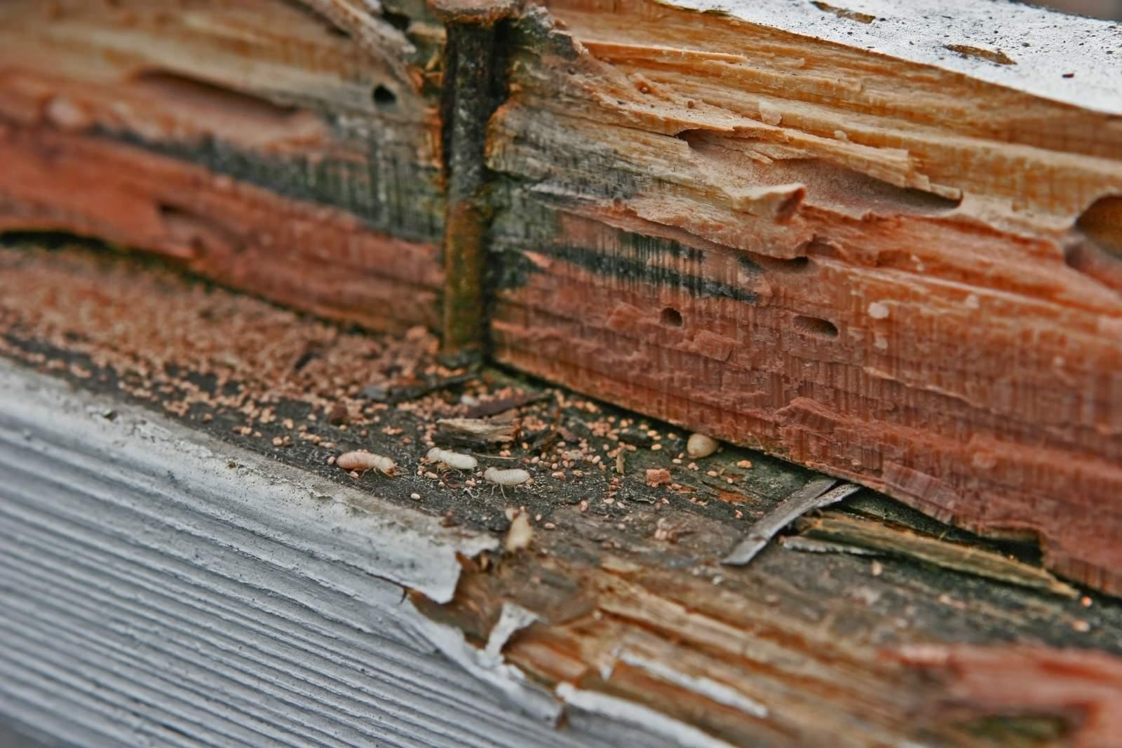 Самые эффективные средства борьбы с термитами: лучшие химикаты и ловушки
