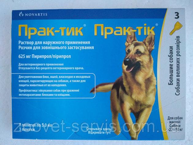 Прививка для собак от клещей: список вакцин, правила вакцинация, противопоказания