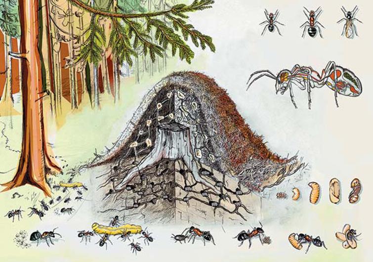 Роль и значение термитов. термиты, термит, термитник. отряд: термиты = isoptera. питание, биология, социальная жизнь
