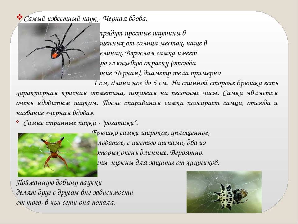 Сколько ног у паука и зачем ему их столько?