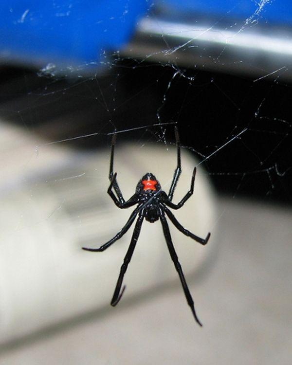 Какой паук самый большой на земле — фото и описание крупнейших пауков планеты