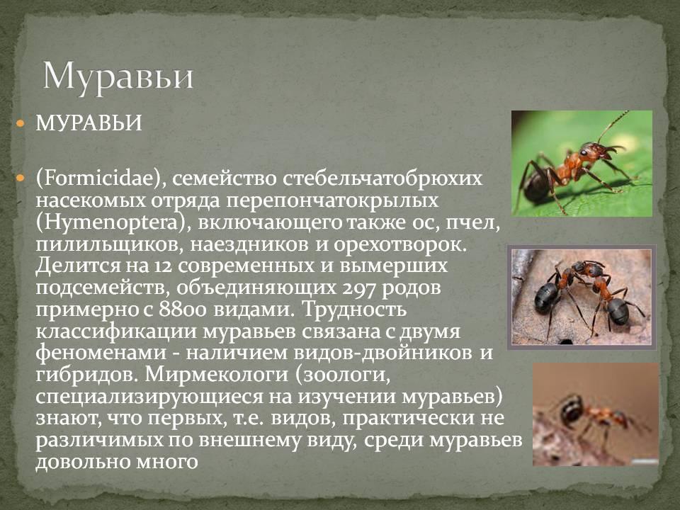Муравьед животное. описание, особенности, виды, образ жизни и среда обитания муравьеда