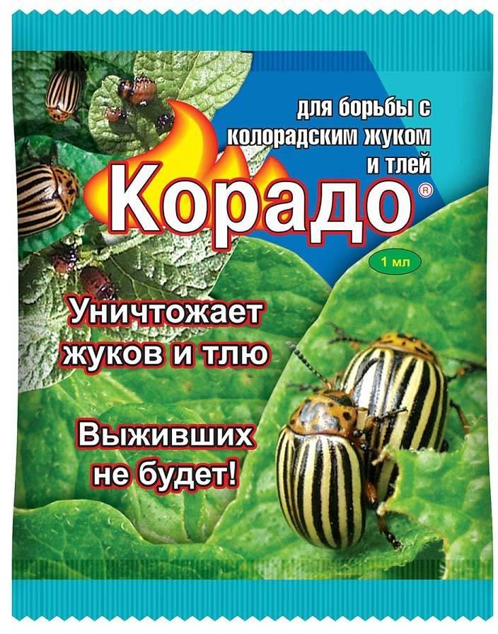 Все, что нужно знать о препарате корадо от колорадского жука русский фермер