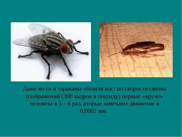 Когда скорость автомобиля составляет 120 км/ч, почему муха в автомобиле не попадает в заднее стекло: математическое объяснение