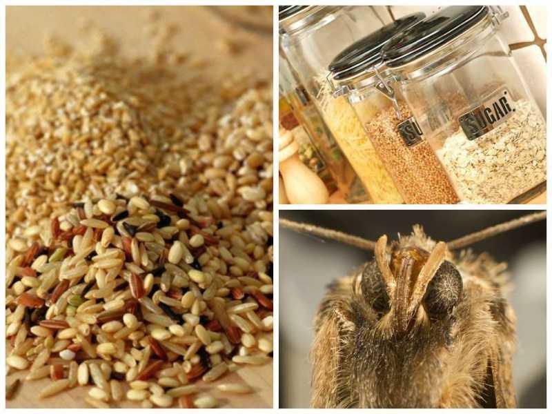 Ищем место гнездования моли у себя дома: как избавиться от насекомого вредителя на кухне