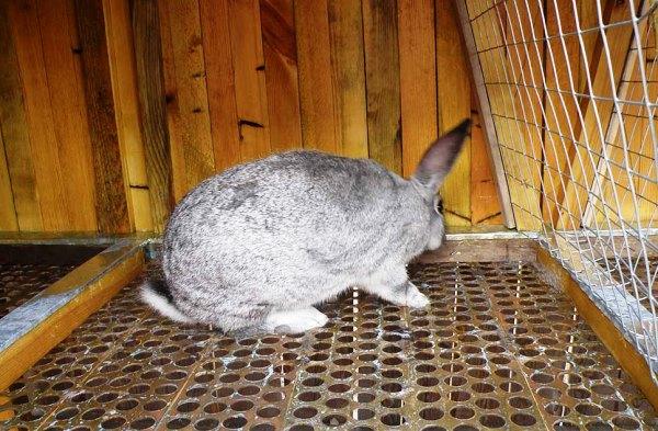 Как помочь кроликам в жару: 6 эффективных способов