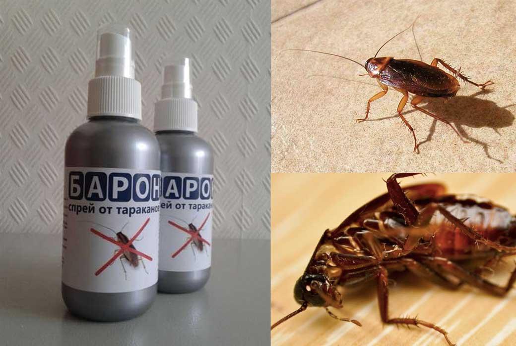 Самые эффективные средства от тараканов в квартире: фас, раптор, комбат, тайга и барон