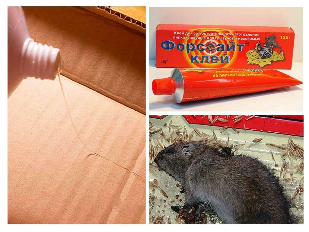 Как эффективно избавиться от мышей в частном доме навсегда?