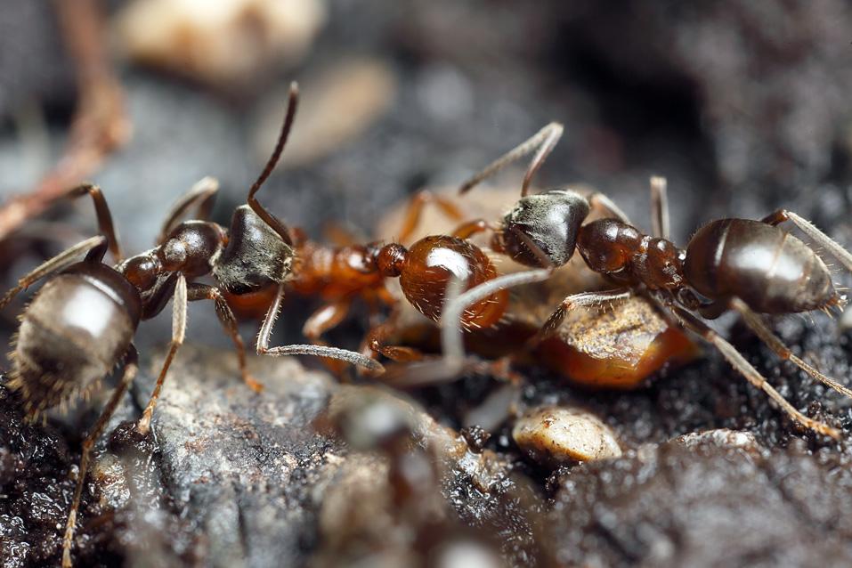 Маленький мир или факты из жизни муравьев – 30 фото - картинки