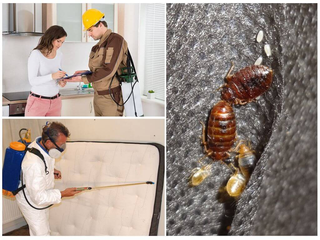 ❶ 10 простых способов избавиться от клопов +10 доступных средств +12 химических препаратов инсектицидов
