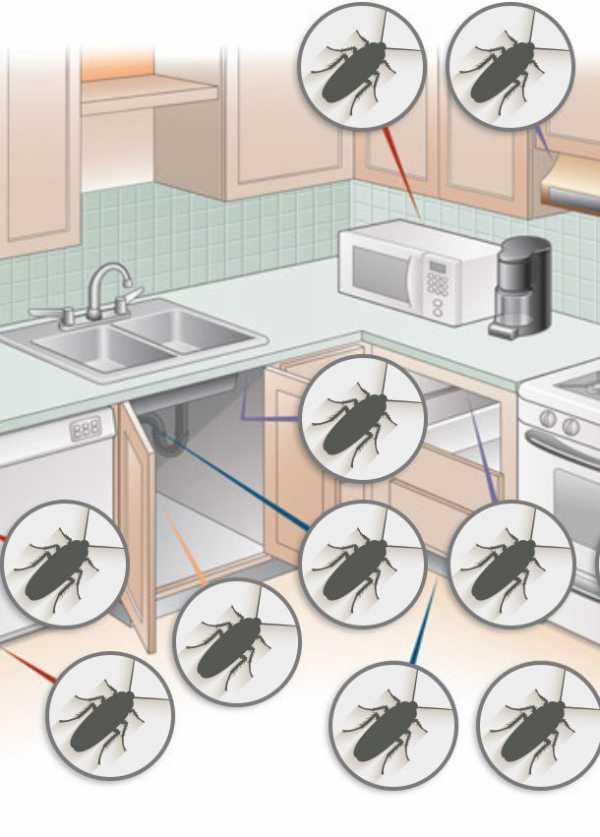 Дезинсекция от тараканов – самый эффективный метод борьбы с вредителями