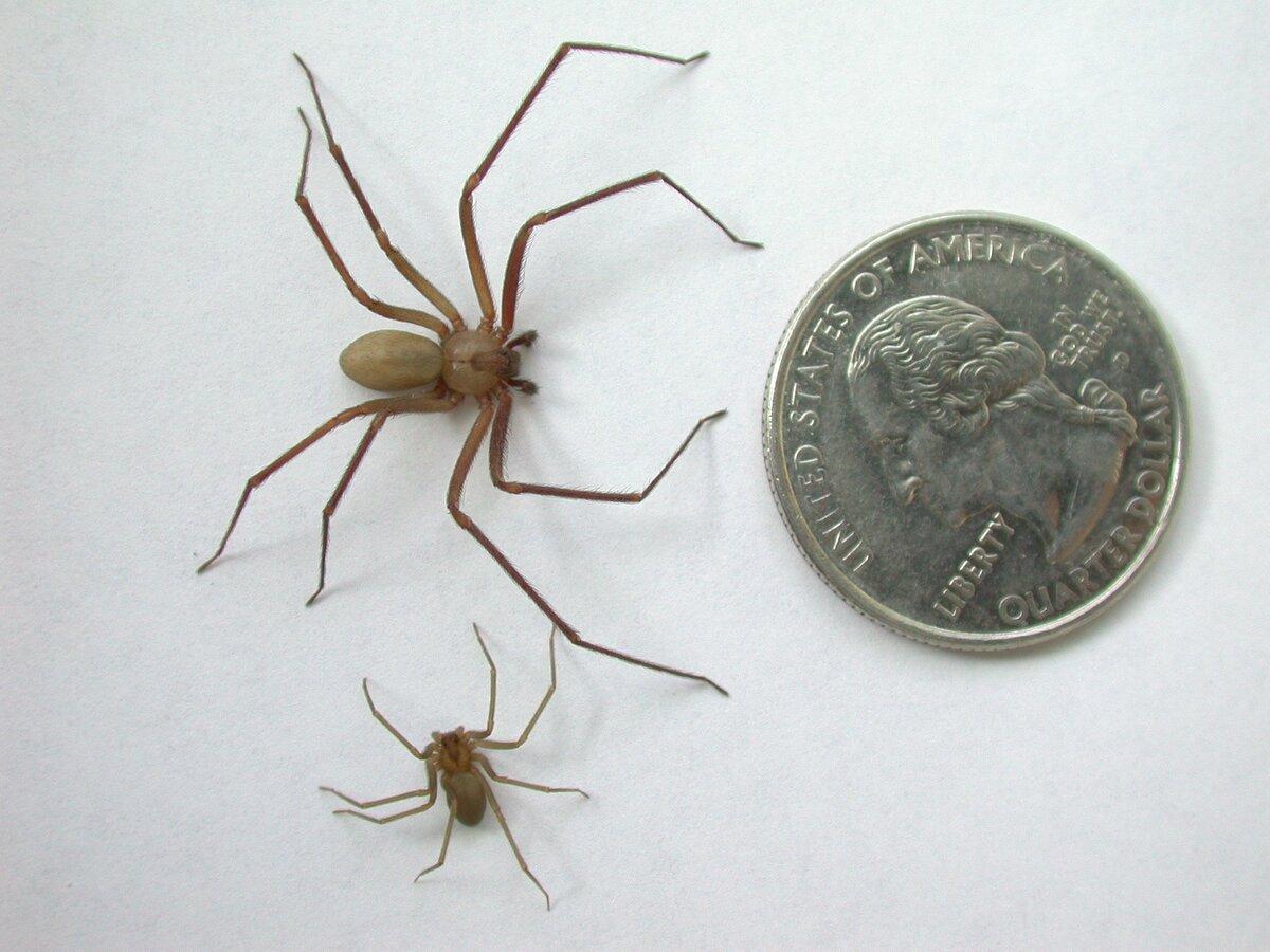 Укус паука: как выглядит, что делать если паук ядовитый, первая помощь