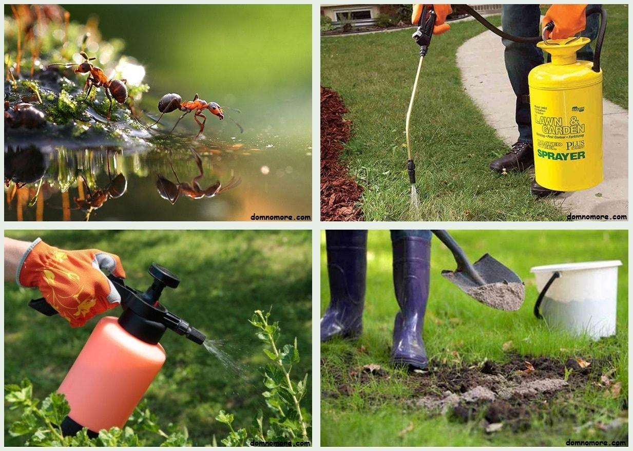 Как избавиться от муравьев на садовом участке быстро и навсегда