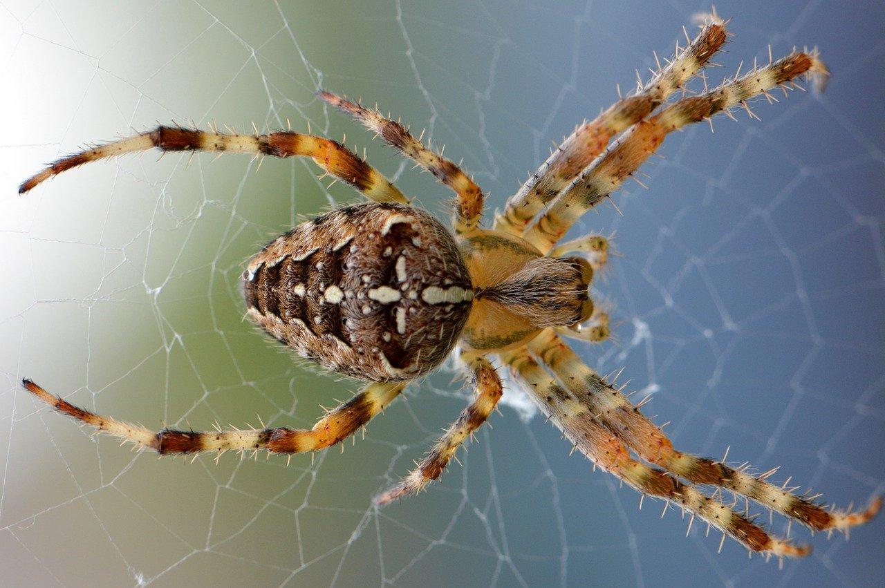 Известные и интересные виды пауков