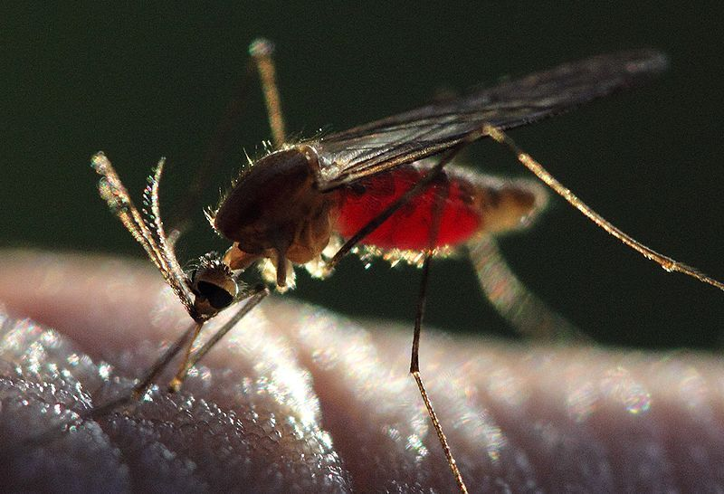 Опасность малярийного комара