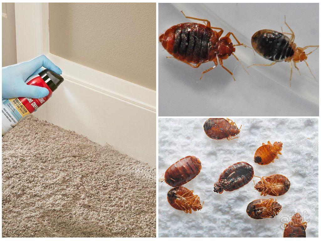 ❶ чего боятся клопы │ постельные │ домашние │ в квартире больше всего