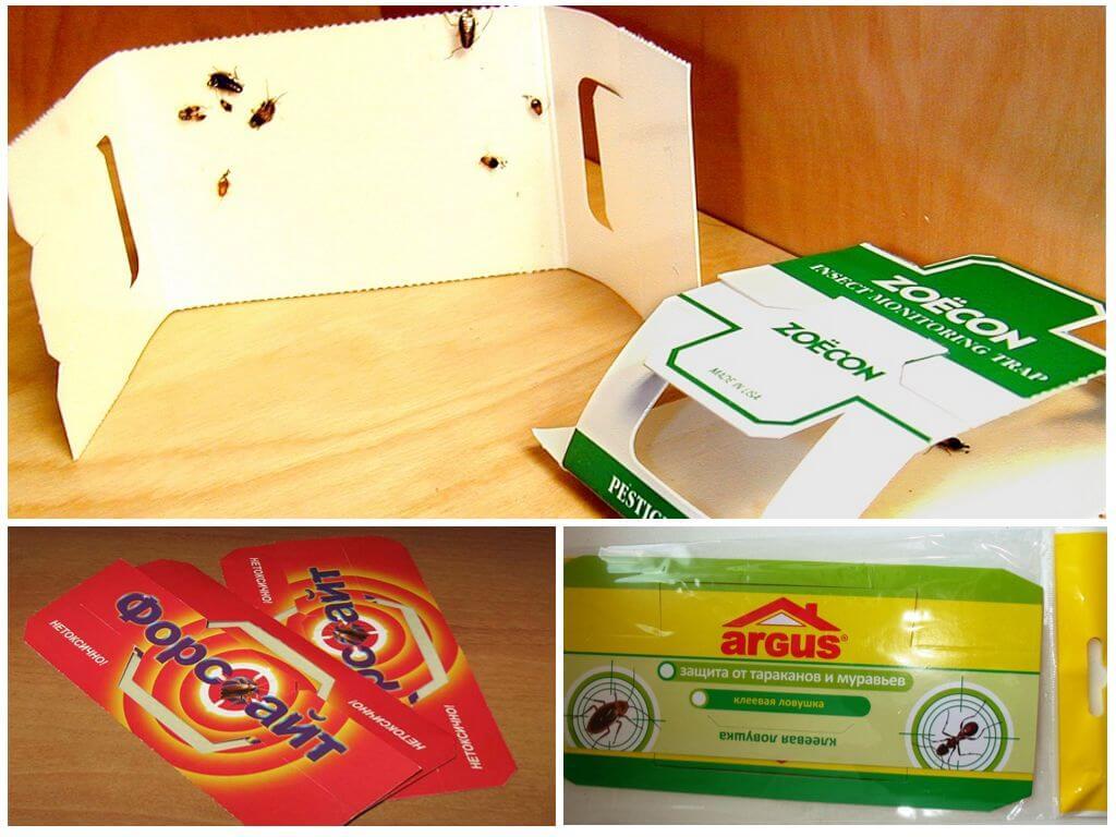 5 самых эффективных ловушек для тараканов: своими руками и покупные