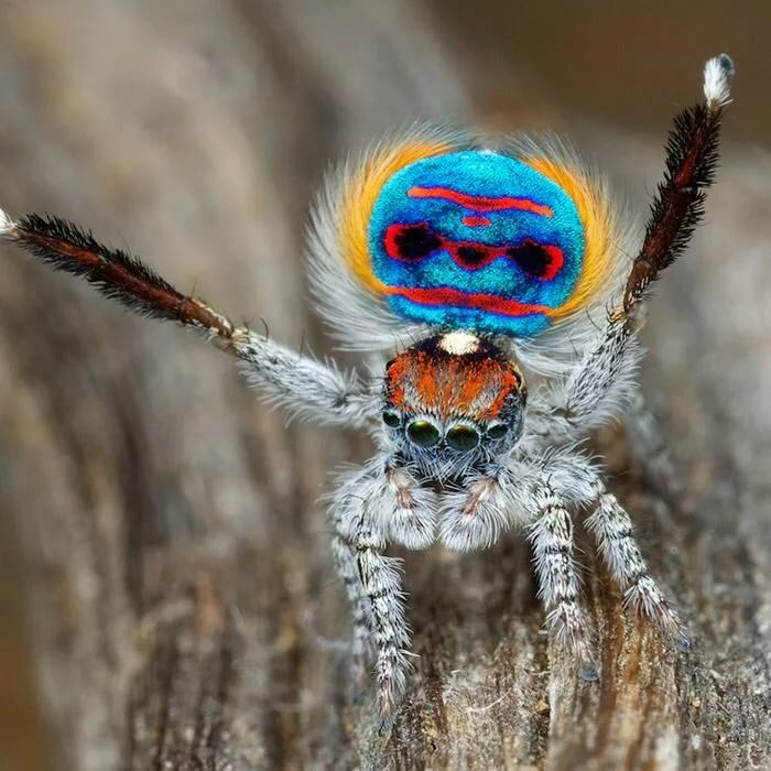 50 интересных фактов о пауках  для любознательных — общенет
