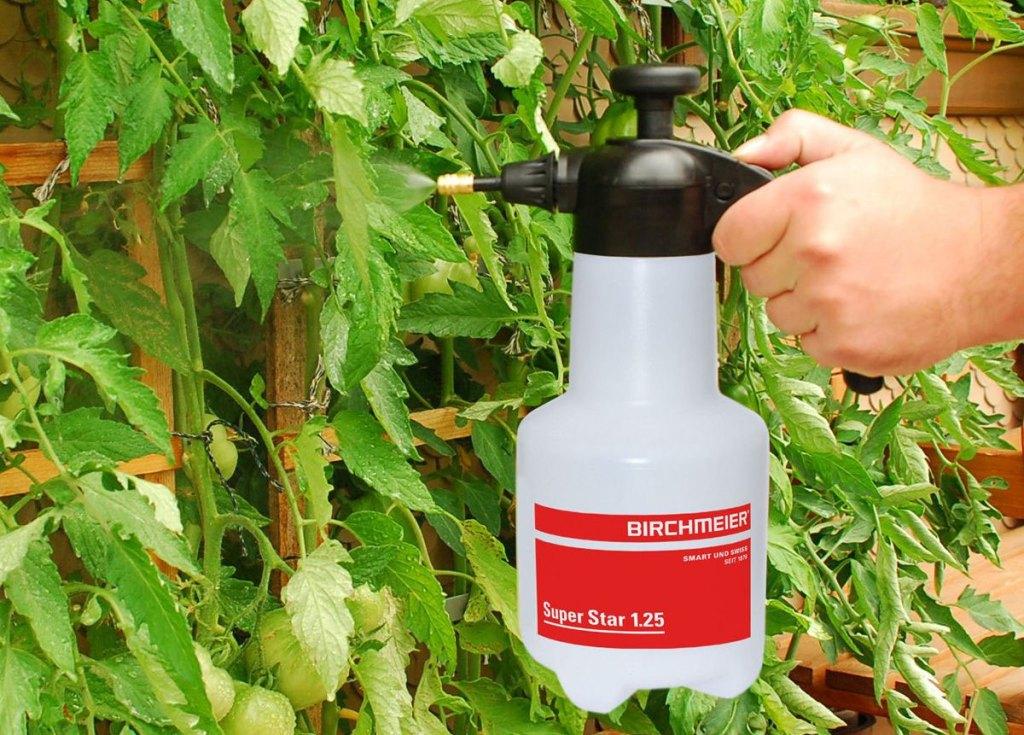 Нашатырный спирт от тли и муравьев: борьба с вредителями народными способами