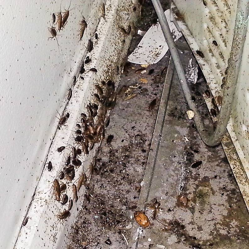 Какие средства от тараканов выбрать, чтобы избавиться от них навсегда. как навсегда избавиться от домашних тараканов