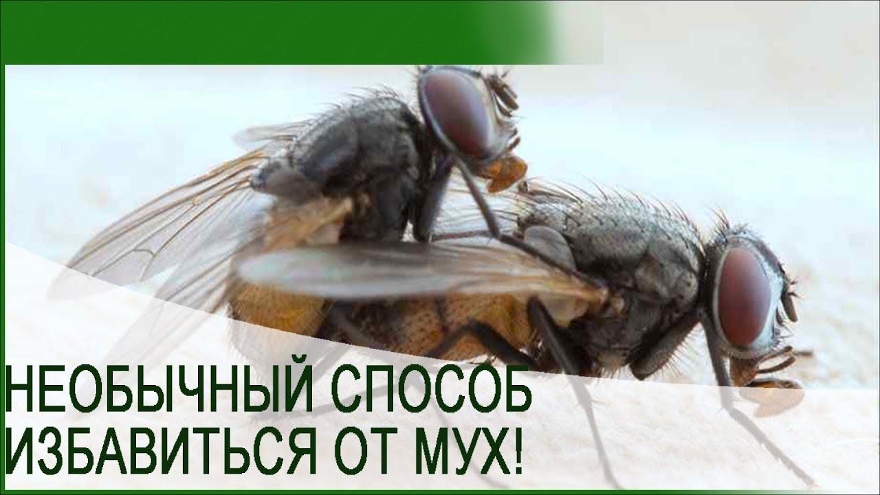 Как бороться с мухами на улице: на даче, на грядках