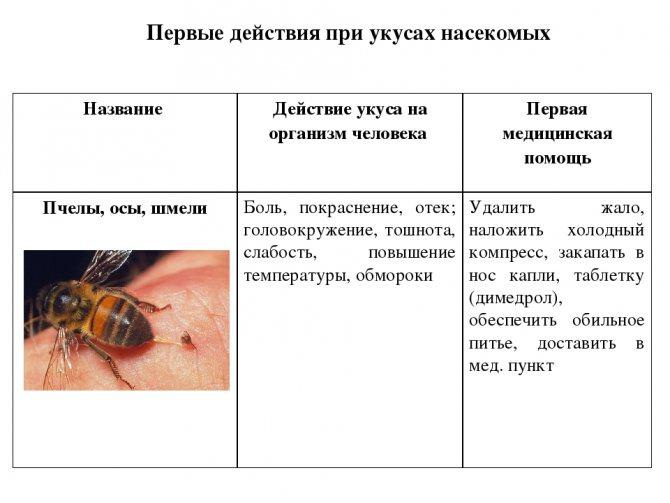 Укусила пчела: что делать и как оказать первую помощь, как снять опухоль и покраснение