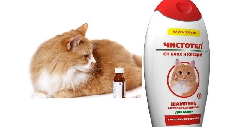 Как часто можно мыть котенка шампунем от блох: периодичность и правила обработки