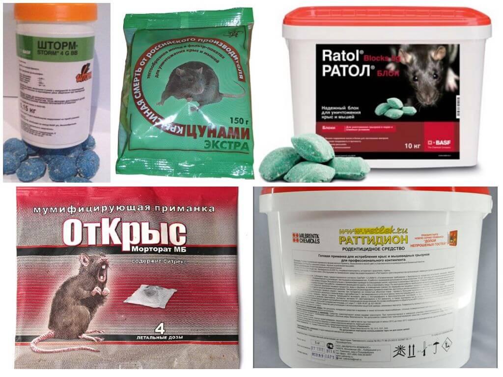 Отрава для крыс: виды, обзор средств и правила их безопасного использования