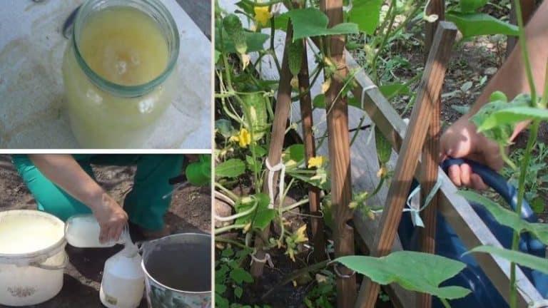 Сода от муравьёв на огороде — инструкция для садовода