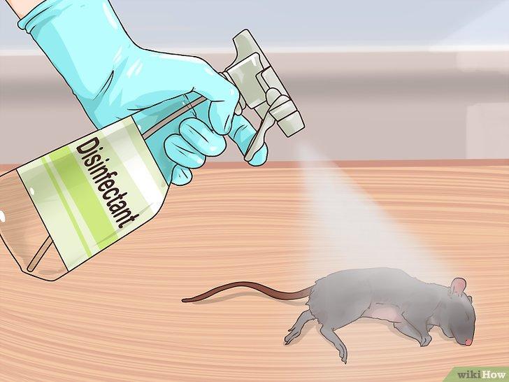 Как пахнут мыши и как этот запах удалить