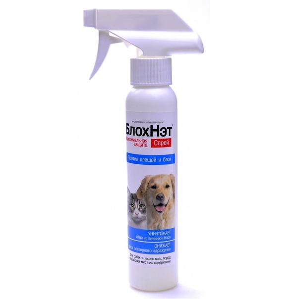 Эффективен ли шампунь от блох для собак, как часто мыть собаку и другие нюансы