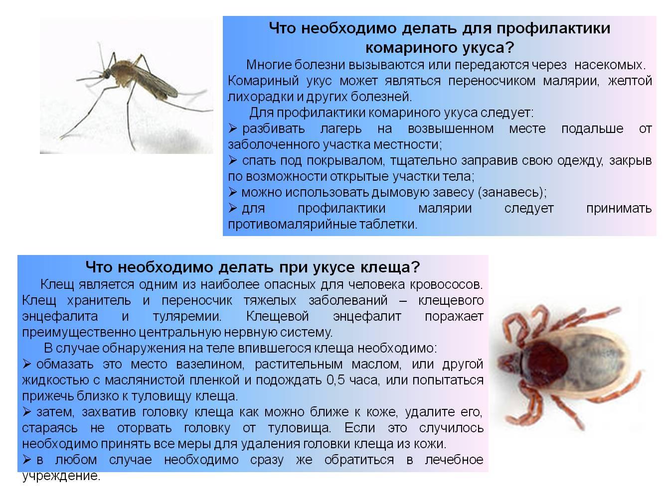 Москиты – описание, виды, места обитания