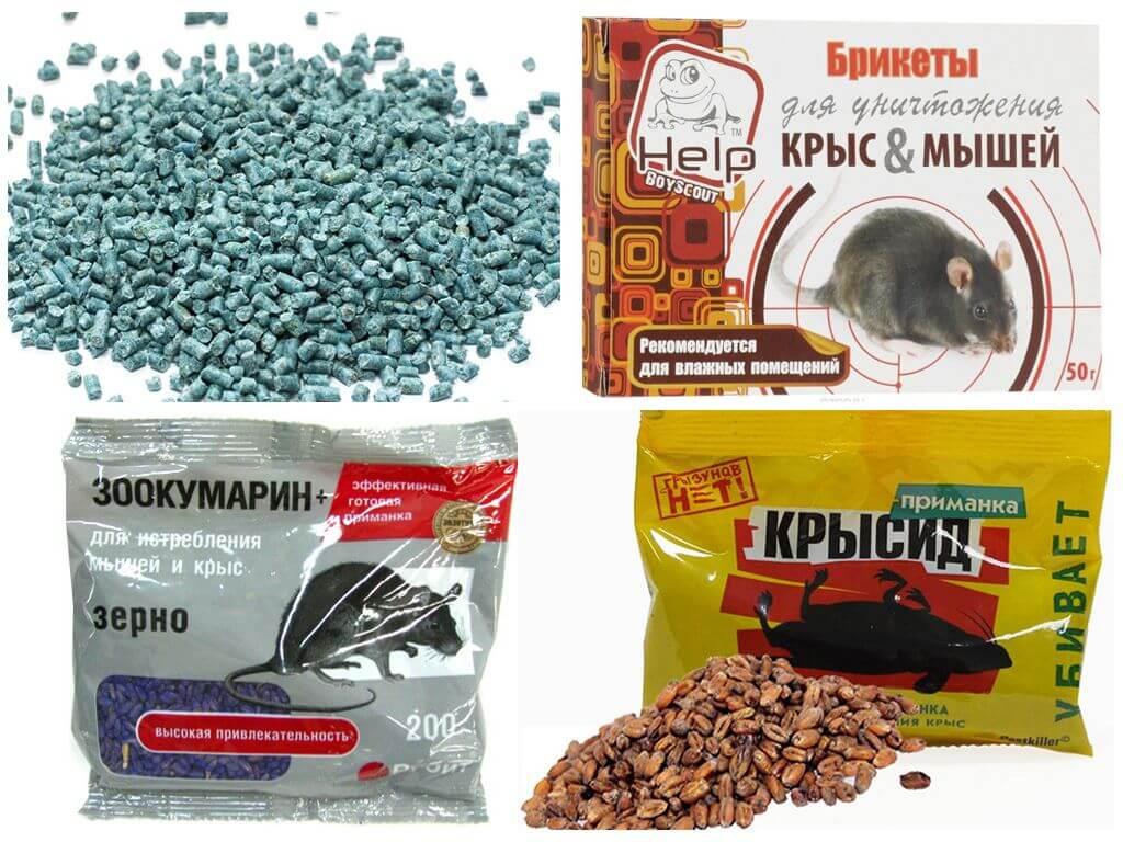 Чем травить крыс - эффективные химические и народные средства, инструкции пользования