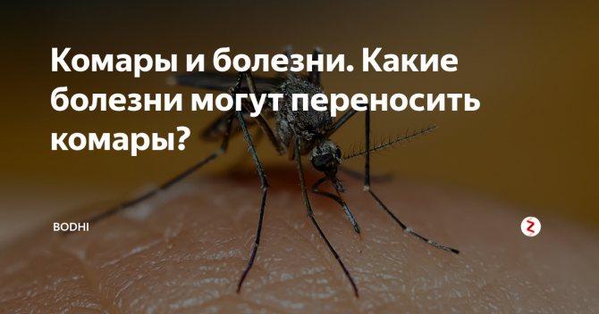 Может ли комар заразить спидом или вич? обоснованные факты.