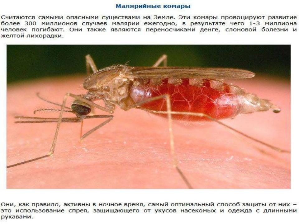 Малярийный комар (самка): как выглядит и чем опасен?