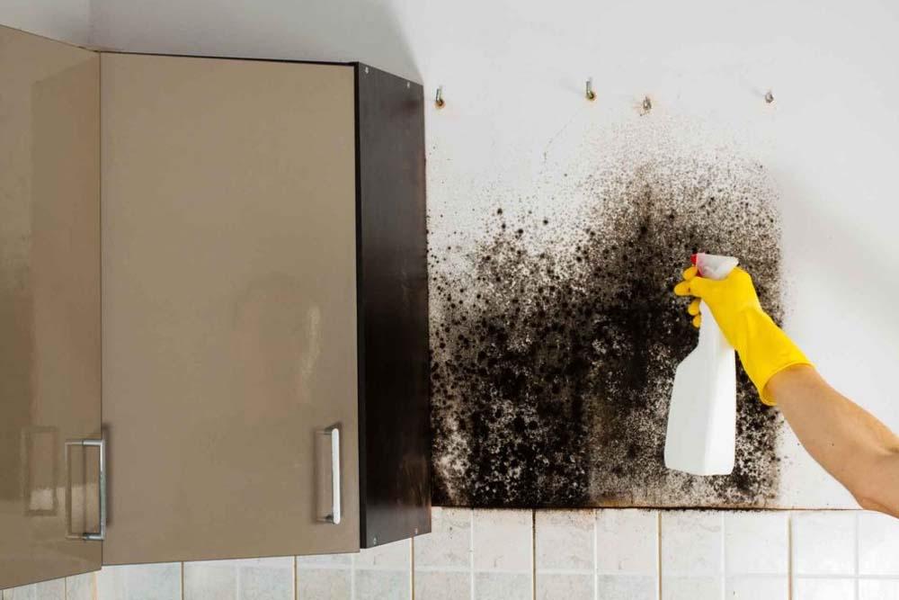 Как убрать плесень на кухне быстро и надолго