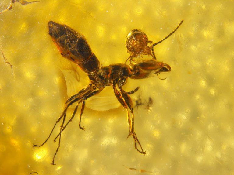 Применение средства «доктор клаус» против муравьев и клещей