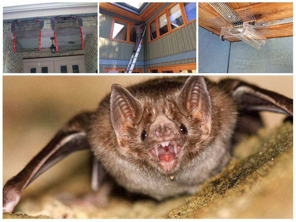 Как вывести летучих мышей — лучшие средства для борьбы
