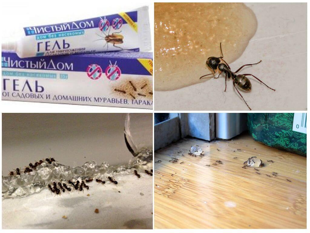 Как избавиться от надоедливых насекомых? борьба с муравьями в квартире народными средствами