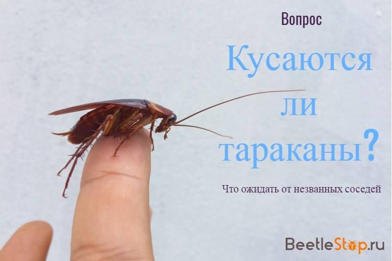 Кусаются ли домашние тараканы: причины, последствия, лечение