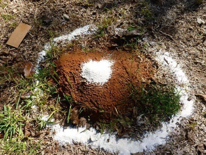 Как избавиться от муравьев: фото, видео, способы борьбы с муравьями