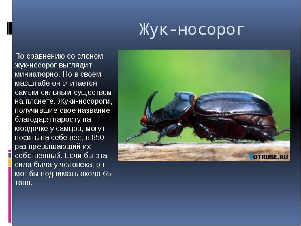 Самый гигантский таракан