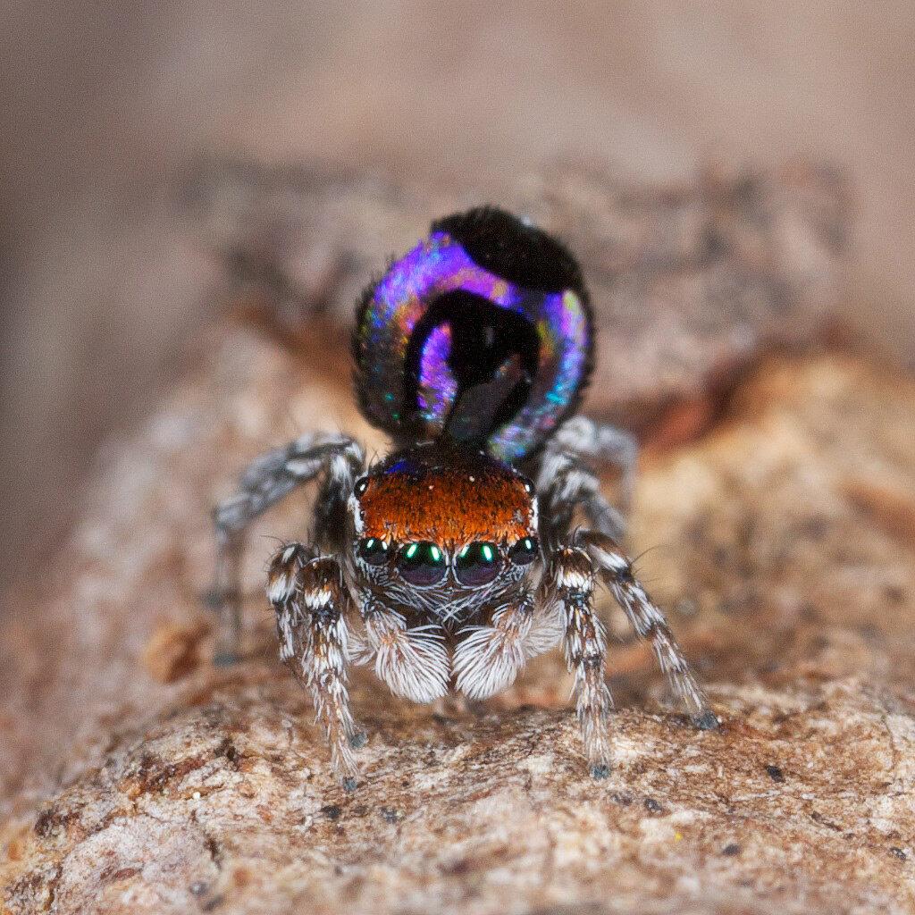Известные и интересные виды пауков - удивительный мир животных