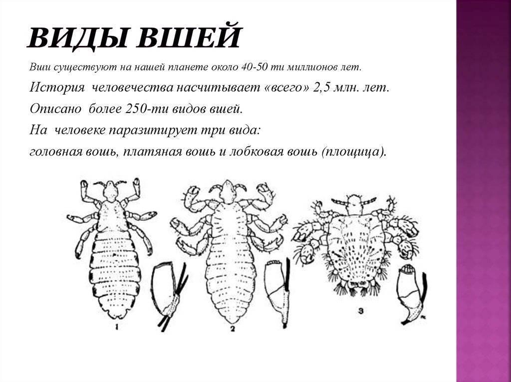 Укусы вшей на теле и на голове: как выглядят, кусают ли гниды?