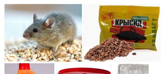 Отрава для мышей: эффективные препараты и правила их применения