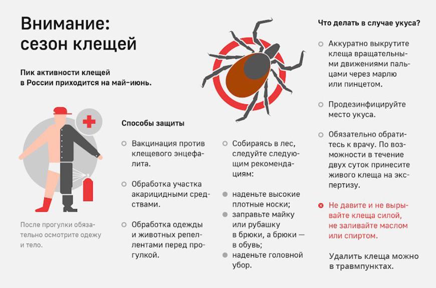 Анализ крови после укуса клеща – какие анализы сдавать если укусил клещ